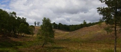 Rugeley Quarry